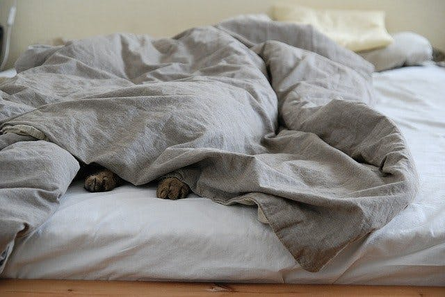 Katze unter Bettdecke auf Bett