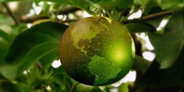 Ein grüner Apfel als Symbol für nachhaltige online Shops