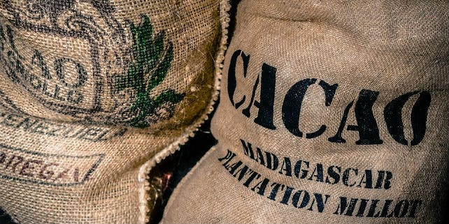 Nachhaltiger Kakao Anbau