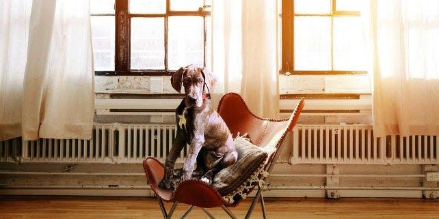 "Hunde im Büro: so gelingt das Projekt ""Bürohund"""