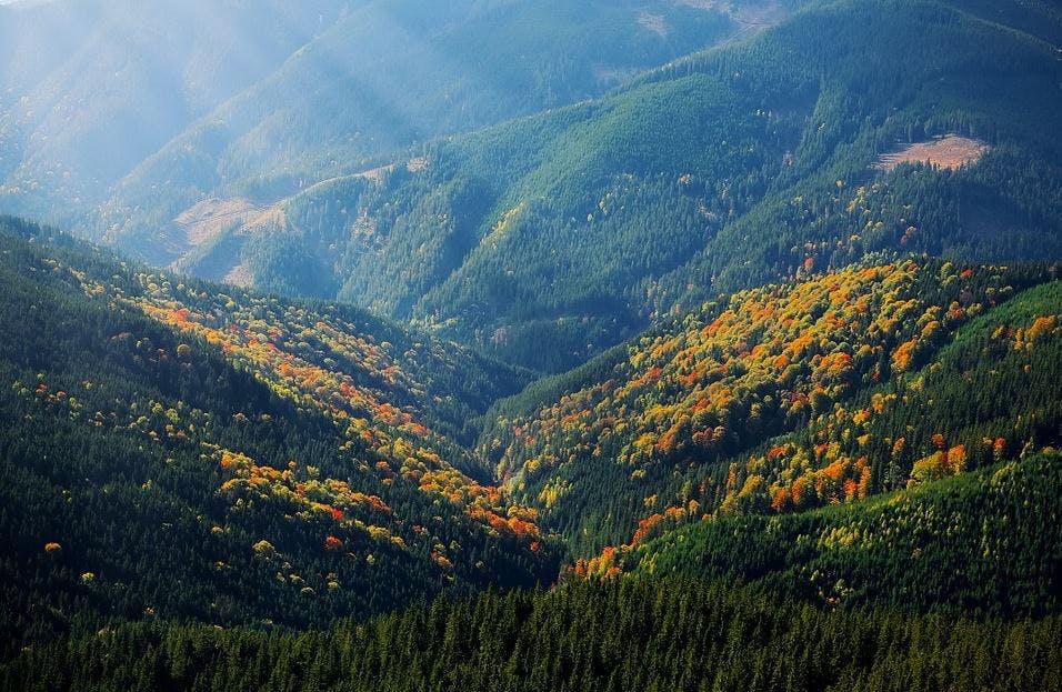 Bewaldete Hügel und Tal