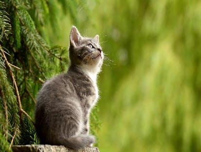 Zooplus macht Ihre Katze glücklich