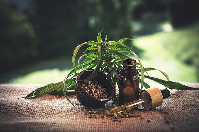 Hanf Pflanze, Samen und Pipette