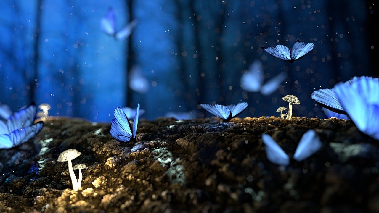 Blaue Schmetterlinge im Wald