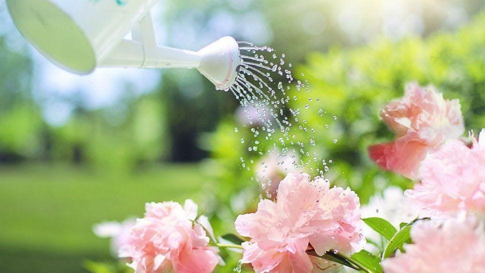 Blumen erst abends zu bewässern spart Wasser und schont die Blumen.