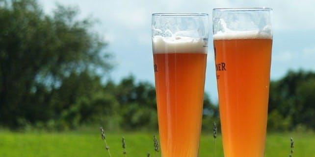 Die Biersorte Weizenbier oder Weißbier
