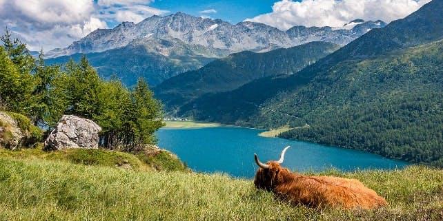 Nachhaltige Online Shops verkaufen auch Fleisch, etwa von einer Kuh