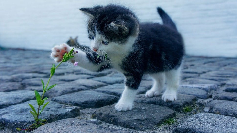 Ein Kätzchen spielt mit einer Pflanze auf Kopfsteinpflaster