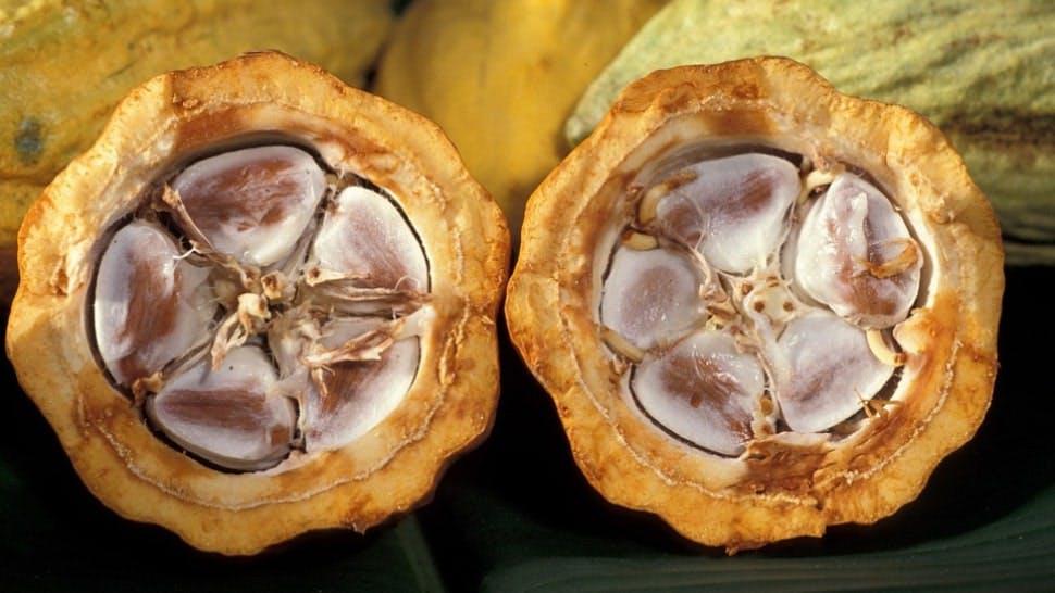 Rohe Kakaobohnen