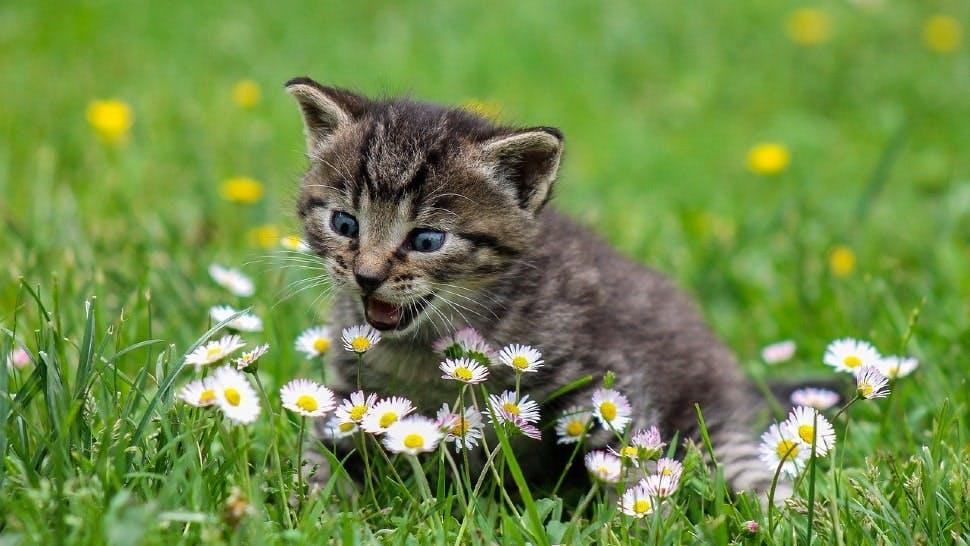 Eine kleine Katze sitzt im Gras und faucht Blumen an