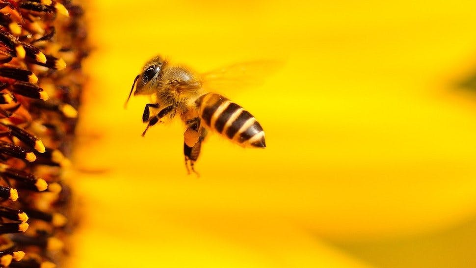 Pflege aus Bienenwachs perfekt als Geschenk